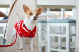 Idee fai da te per fare vestiti per cani
