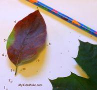 Lavoretti con i bambini: giochi con le foglie