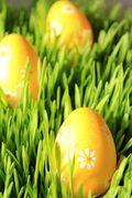 Tutorial: decorazioni di Pasqua con germogli di grano
